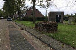 Bladkorven in Hollands Kroon