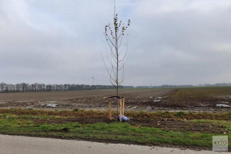 Planten bomen in volle gang