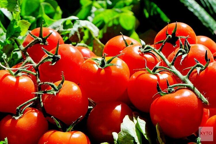 Tomatenvirus gevonden bij drie telers in Hollands Kroon