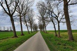 Firma Stoop start met verwijderen populieren langs Wieringerrandweg