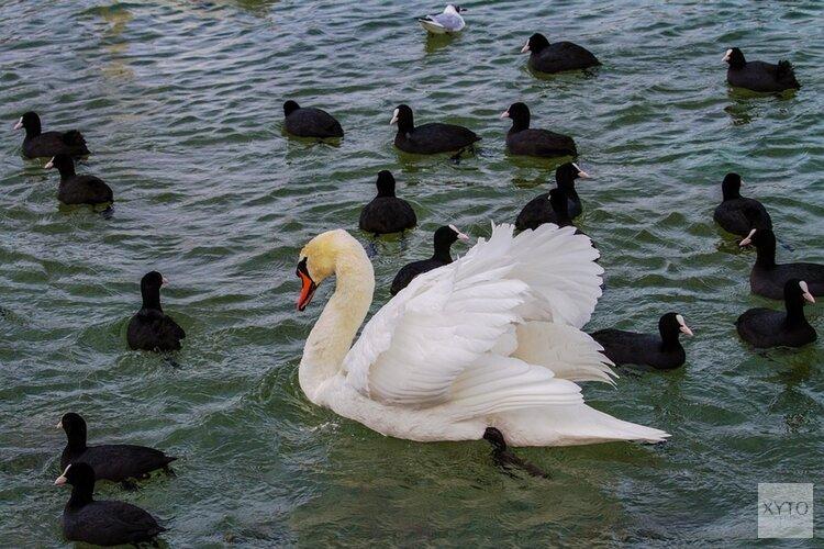 Natuurorganisaties tegen energiewinning in IJsselmeergebied: 'Is een plek voor vogels'