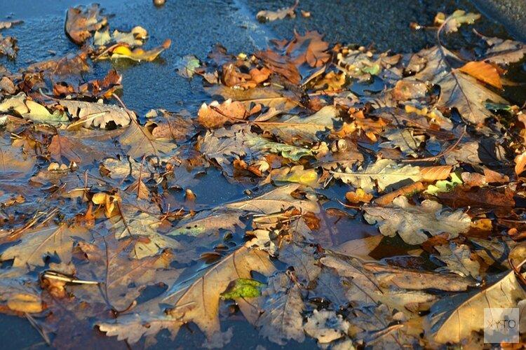 Komende dagen regenachtig herfstweer